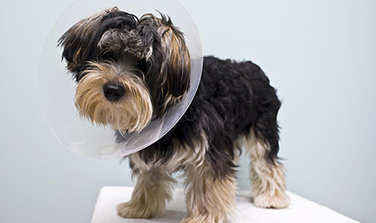 Spay - - AMC of Southern California